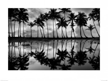 Dennis Frates (Palm Reflection)